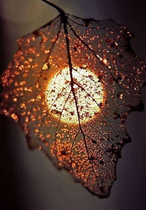 Beautiful picture, leaf, sun