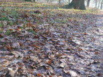 RIchmond Park, leaves, frost