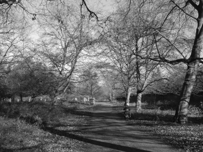 Richmond Park, leaves, trees, sunny, back and white