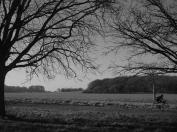 Richmond Park, leaves, trees, sunny
