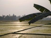 Rice paddies at dusk